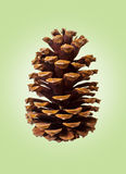 Pine Cone on Green Retro background Stock Image