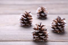 Pine cone on a grey wooden background royalty free stock images
