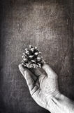 Pine cone in hand Royalty Free Stock Images