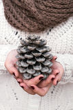 Pine cone. Hands holding big pine cone Stock Images