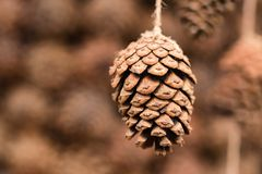 Pine cone hangs on rope close stock photo