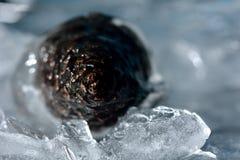 Pine cone in ice Stock Photos