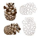 Pine cone illustration. Over white background Stock Image