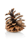 Pine cone isolated Royalty Free Stock Images