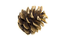 Pine cone isolated Royalty Free Stock Photos