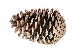 Pine cone isolated. Over white stock photo
