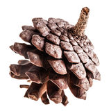 Pine cone isolated Royalty Free Stock Image