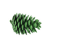 Pine Cone. Isolated on white background with clipping path Royalty Free Stock Photo