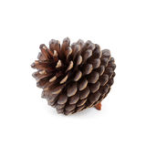 Pine cone Royalty Free Stock Photography