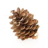 Pine cone Royalty Free Stock Images