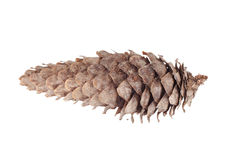 Pine cone isolated on white background Stock Image
