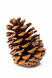 Pine cone. Isolated on white background Royalty Free Stock Images
