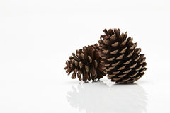 Pine cone isolated on white background Royalty Free Stock Photo
