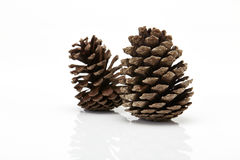 Pine cone isolated on white background Stock Photography