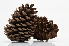 Pine cone isolated on white background Stock Photos