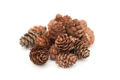 Pine Cone Isolated on White Background. Winter or Cristmas Imag witn Copy Paste. Pine Cone Isolated on White Background. Winter Stock Photo