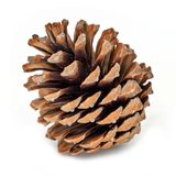 Pine Cone Isolated On White. Close up of decoration for christmas stock photos