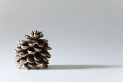Pine cone and its lond shadow. On white background Royalty Free Stock Image