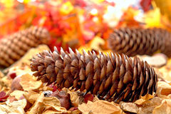 Pine Cone on Leaf Covered Fall Forest Floor Stock Image