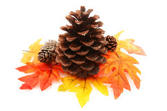 Pine Cone With Leaves Stock Images