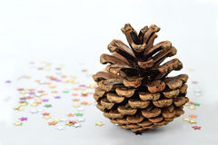 Pine cone on light background Royalty Free Stock Image