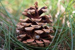 Pine cone with a little snail shell stock photos
