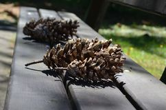 Pine cone. Lot of pine cones on a bench Stock Image