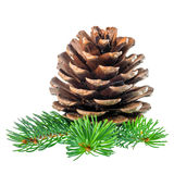 Pine cone and needles is isolated on white background Stock Images