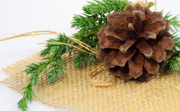 Pine-cone ornament Stock Image