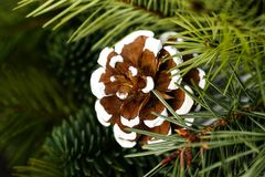 Pine Cone Ornament on Tree Branch. Pine Cone Ornament Peeking out from a Tree Branch Stock Photos