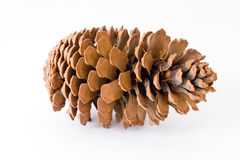 Pine cone over white background Royalty Free Stock Images