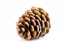 Pine cone over the white background Stock Photography