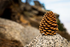 Pine Cone on palm Spring mountain. Rock stock image