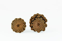 Pine Cone Patterns Royalty Free Stock Image