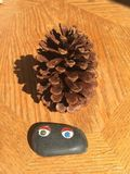 Pine cone and pet rock sitting on a table. Stock Image