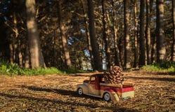 Pine Cone Pick up Stock Photo
