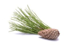 Pine cone and pine branch on white background Royalty Free Stock Photos