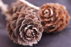 Pine cone. In black and brown Royalty Free Stock Photo