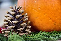 Pine Cone and Pumpkin Royalty Free Stock Photography