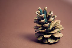 Pine cone on red. Pine cone on a red background Stock Photos