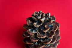 Pine cone on red background Royalty Free Stock Photography