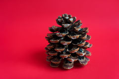 Pine cone on red background Royalty Free Stock Photos