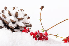 Pine cone and red berries in white snow Stock Photo