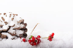 Pine cone and red berries in white snow Royalty Free Stock Photography