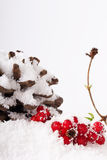 Pine cone and red berries in white snow Stock Image