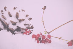 Pine cone and red berries in white snow Vintage Retro Filter. Stock Image