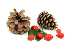 Pine-cone with red dog roses Stock Photography