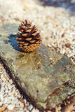 Pine cone on a rock with pebbles Stock Image