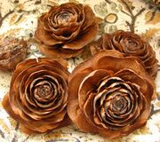 pine cone roses 3 Stock Photography