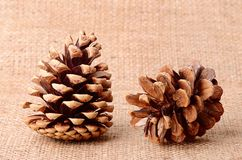 Pine cone on sackcloth background Stock Photography